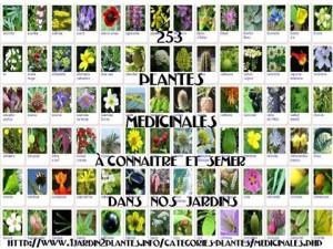 plantes_n