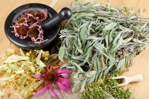 Quelles-sont-les-plantes-medicinales-pour-maigrir-