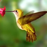 colibri-totem-300-11883_200x200