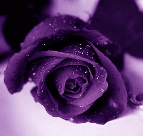 signification de la couleur violette que du bonheur. Black Bedroom Furniture Sets. Home Design Ideas