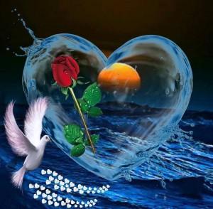 coeur-colombe