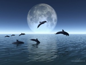 dauphins_lune