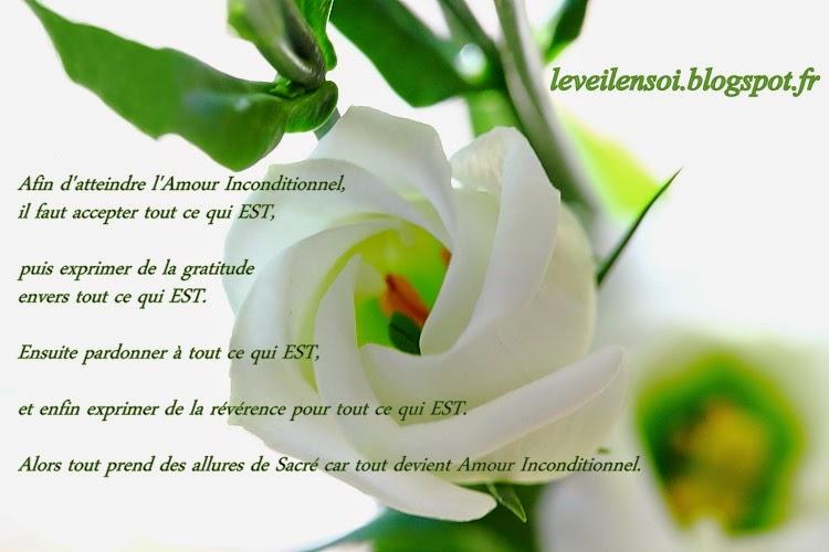 Assez L'amour inconditionnel ! – Que du bonheur GB77