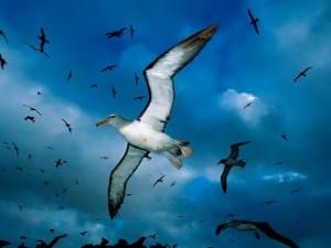 l-albatros-3f11d5f
