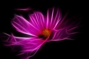 oeuvre-d&-39;art-filigrane-fleur-rose-fractale-numerique_121-68821