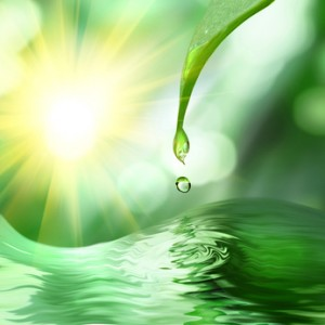 green leaf with drop of water on green sunny background