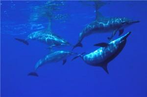 ballet-de-dauphins