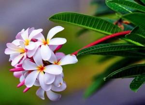 fleurs-banchesvert