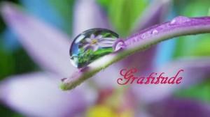 gratitude(violet)
