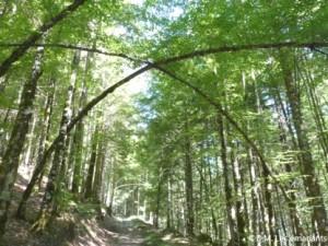 arbres3