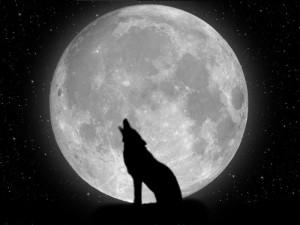 lune-loup