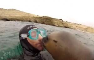 648x415_capture-ecran-video-publiee-facebook-montrant-otarie-embrasser-plongeur-argentine