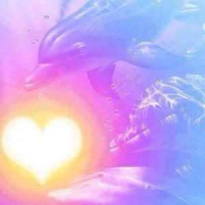 dauphins-coeur-jaune
