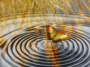 papillon-effet-papillon-300x225