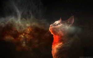 amazing-space-cat