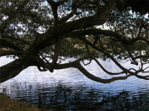 arbre-eau