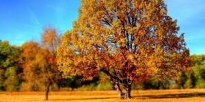 automne-sans-deprime-etre-optimiste-e1444319632428-628x315