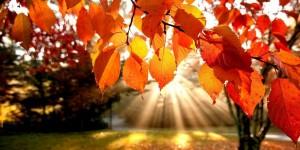naturo-automne-nanaturopathe
