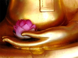 buddha-with-flower-compressor (1)