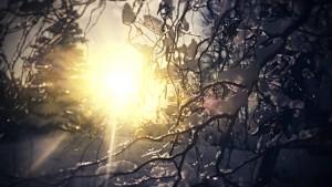 hiver-doux
