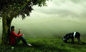 nature-471179_1280