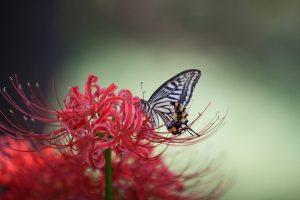 Papillon-Source-Pixabay-Lee-seonghak-768x512