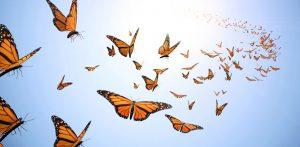 envol-du-papillon-1020x500