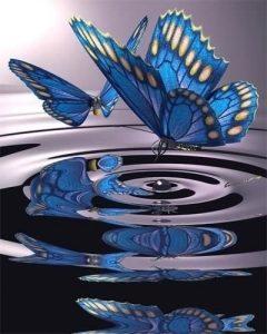 papillons-compressor
