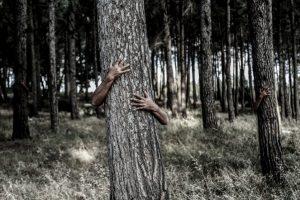 tree-1379426_960_720