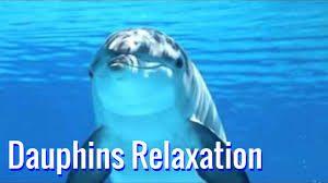 chant-des-dauphins-avec-musique-douce-pour-une-relaxation-profonde