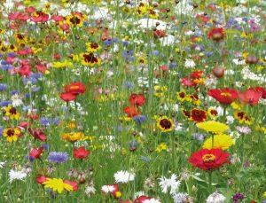 ob_2d1700_les-fleurs-sauvages-belles-et-faciles